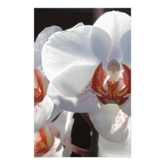 White Orchid Stationery