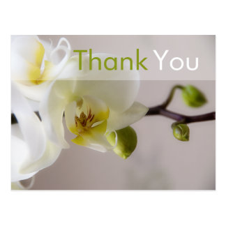 White Orchid • Thank You Postcard