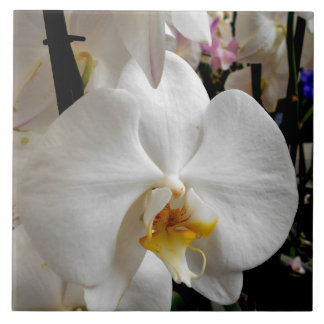 White Orchid Tile