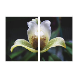 White Orchid Triptych Wall Art Stretched Canvas Print