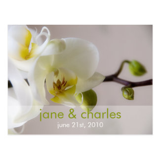 White Orchid • Wedding Invitation Postcard