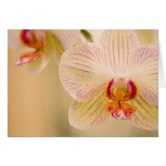 White Orchids Cards