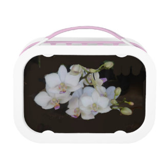 White Orchids Lunch Box