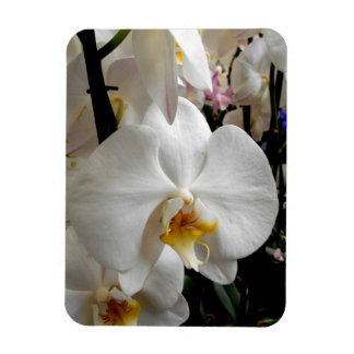 White Orchids Magnet