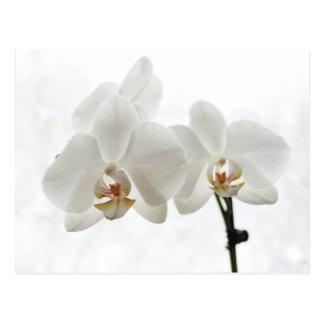 White Orchids Valentine's card