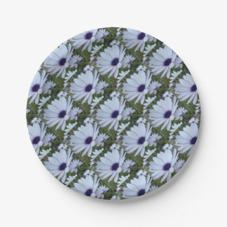 White Osteospermum Flower Daisy With Purple Hue 7 Inch Paper Plate