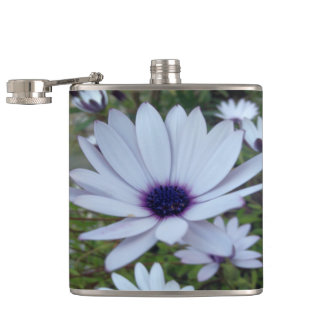 White Osteospermum Flower Daisy With Purple Hue Hip Flask