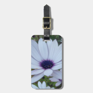 White Osteospermum Flower Daisy With Purple Hue Luggage Tag