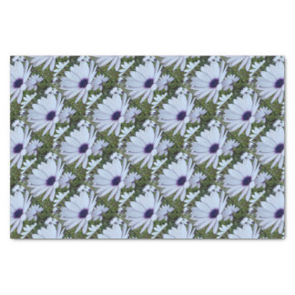 White Osteospermum Flower Daisy With Purple Hue Tissue Paper