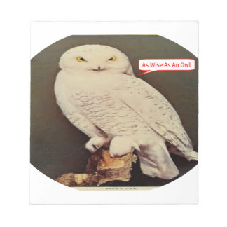 white owl drawing notepad