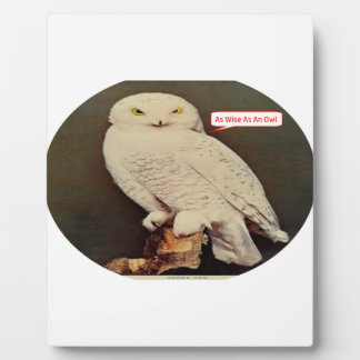 white owl drawing plaque