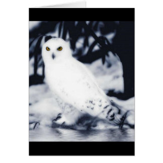 white owl greeting cards