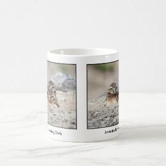 White Owl Mug - Juvenile Burrowing Owls
