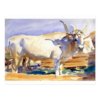 White Ox at Siena by John Singer Sargent Postcard