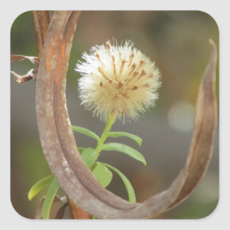 White Panicle Aster Seed Head Square Sticker