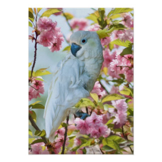 White Parrot in Crab Apple Tree Poster