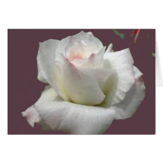 White Passion Rose Greeting Card
