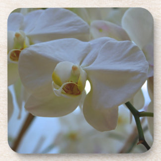 White Peabody Orchid III Drink Coasters