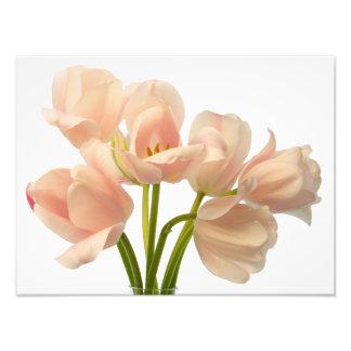 White & Peach Parrot Tulips Background Customized Photo Print