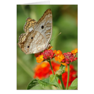 White Peacock Butterfly Blank Note Card