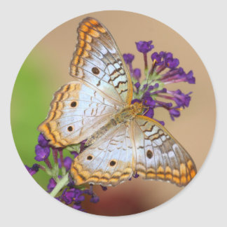 White Peacock on Purple Classic Round Sticker