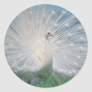 White Peacock Sticker