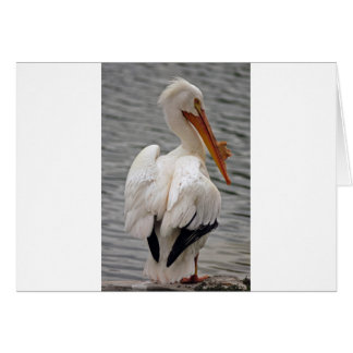 White Pelican Card