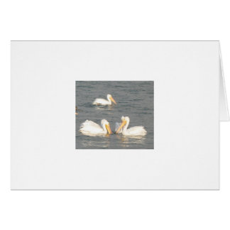 White Pelicans Note Card