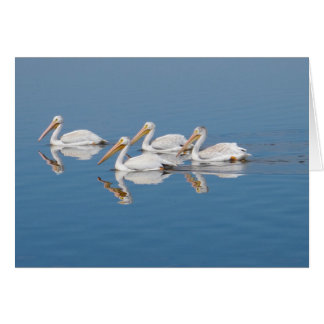 White Pelicans on Barr Lake Card