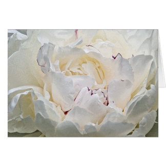 White Peony Blank Photograph Greeting Card