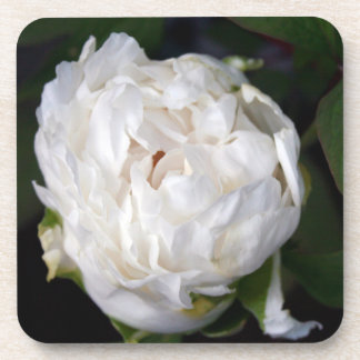 White Peony - Floral Photography - Beverage Coasters