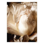 White Peony Flower Sepia Black Background Photo Art