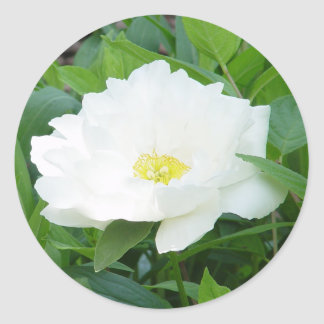 White Peony Flower Stickers