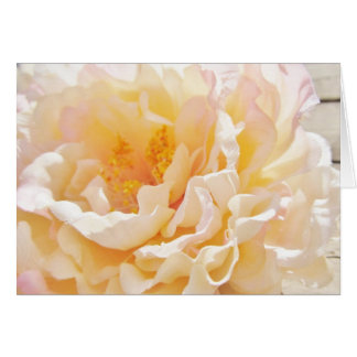 White Peony Note Cards