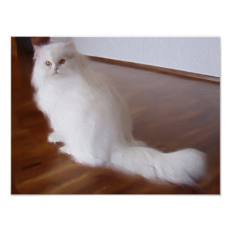 White persian cat poster