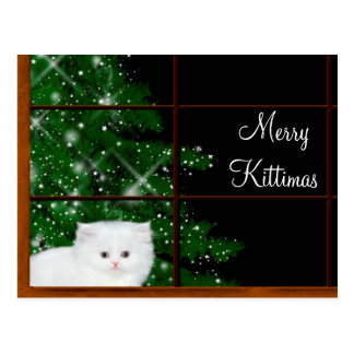 White persian kitten Christmas Postcard