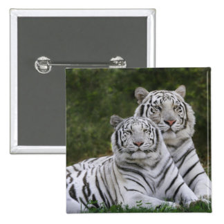White phase, Bengal Tiger, Tigris Buttons