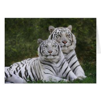 White phase, Bengal Tiger, Tigris Greeting Card