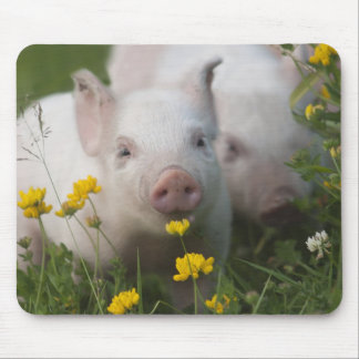 White Piglet Surrounded by Yellow Flowers Mouse Pad