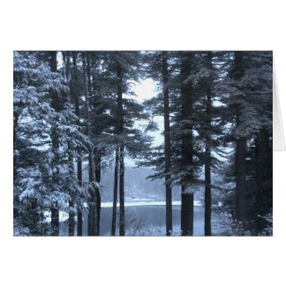 White Pines in Blue Light --- Card