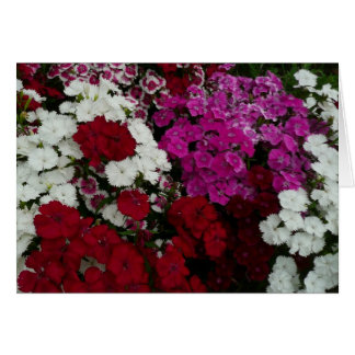 White, Pink and Red Dianthus Floral Photography Card