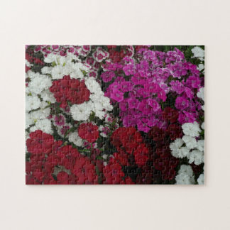 White, Pink and Red Dianthus Floral Photography Jigsaw Puzzle