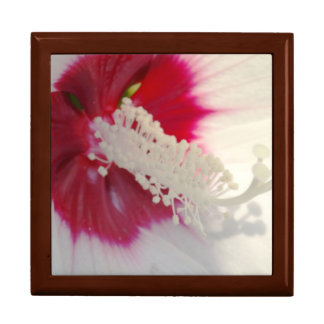 White Pink Close-up photographt Floral Gift Box