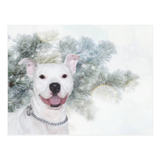 White pitbull Christmas Postcard