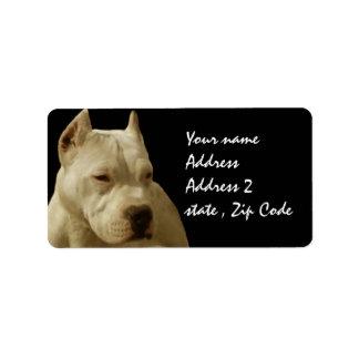 White Pitbull Terrier