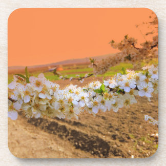 White Plum Blossom Coasters