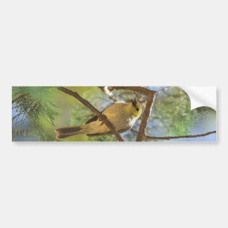White-plumbed Honeyeater Bumper Sticker