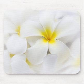 White Plumeria Flower Frangipani Floral Flowers Mouse Pad