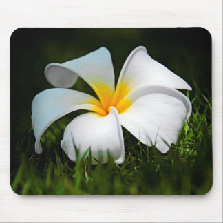 White Plumeria Frangipani Hawaii Flower Mouse Pad