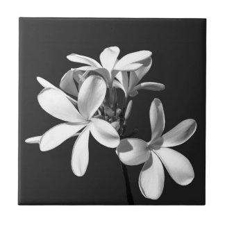 White Plumeria in full bloom Ceramic Tile